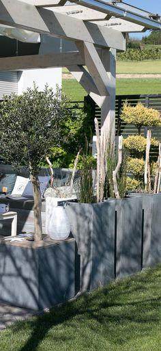 Terrasse mit Pflanzkübeln in Beton Optik. Mit Olivenbaum und Schachtelhalm bepflanzt. Schwemmholz und selbst gebauter Abdeckungen gegen zuviel Regen. Wird auch gleich für Deko genutzt!