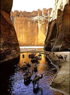 Camel Canyon - CHAD