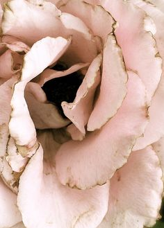 Pink and brown 'When the Last Petal Falls' by. Pink Brown, Pink And Gold, Blush Pink, Pastel Pink, Wallpaper Aesthetic, Pink Chocolate, Desert Rose, Beauty And The Beast, Color Combos