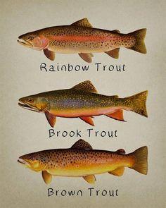 BERKLEY FISHING STICKER DORADO BASS TROUT VINTAGE DECAL MECHANIC TOOLBOX USA