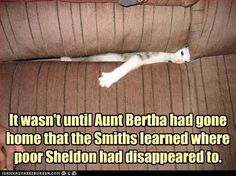 So perfect considering my Aunts family are the Smiths and they have a whole lot of cats! lol