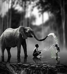 Photography black and white children smile ideas Wild Animals Photography, Elephant Photography, Wildlife Photography, White Photography, Elephant Love, Elephant Art, Animals And Pets, Funny Animals, Cute Animals