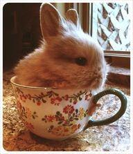 Bunny in a teacup! Animals in teacups, doesn't get any cuter!!