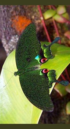 ◑≈◑≈◑≈◑ Butterfly ◑≈◑≈◑≈◑ ? species