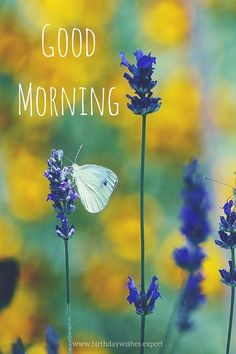 Good Morning image with flowers and butterfly