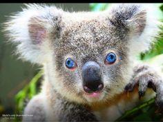Amazing eyes.