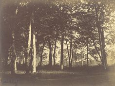 Curtain of Trees; Gustave Le Gray (French, 1820 - 1884); Paris, France; about 1849