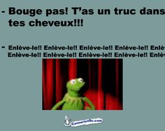 Truc dans les cheveux Funny Picture Quotes, Funny Pictures, Funny Quotes, Funny Memes, Hilarious, Jokes, Kermit, Lol, How To Speak French