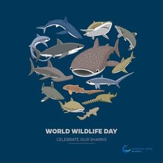 Happy #world #wildlifeday from the #sharks.