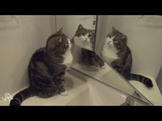 cats and mirrors