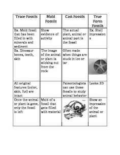Four Types of Fossils Project HandsOn Activity with
