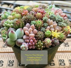 Succulents have been popular with young people in recent years, are very popular in ornamental plants, and are getting more and more popular. Succulents In Containers, Cacti And Succulents, Planting Succulents, Cactus Plants, Garden Plants, House Plants, Planting Flowers, Tomato Plants, Succulent Landscaping