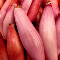 Shallot (Banana) Seeds - Simiane - 177907 - Onions and Shallots - Potatoes Onions Garlic - Gardening All Vegetables, Growing Vegetables, Edible Garden, Vegetable Garden, Fruit Garden, Banana Seeds, Sutton Seeds, Maitake Mushroom, Pink Banana