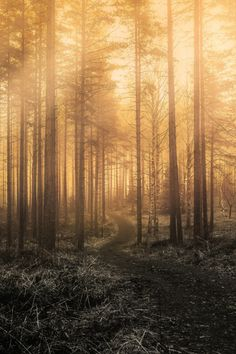 ponderation: Monochromic Forest by Lauri Lohi Beautiful World, Beautiful Places, Landscape Photography, Nature Photography, Forest Path, Walk In The Woods, Wild Nature, Natural World, Pretty Pictures