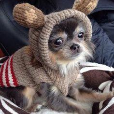 Teddy Bear? Ewok? #OMGPuppies