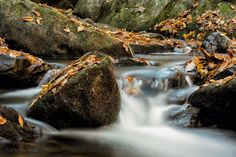 """Seeing Through God's Eyes: """"Resolute"""" The search for fall color in Georgia lead me to this shoals."""
