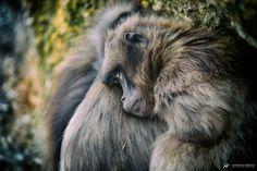 Mariano Desole | Fine Art Photography - Tiere Brown Bear, Fine Art Photography, My Photos, Animals, Pictures, Animales, Art Photography, Animaux, Animal