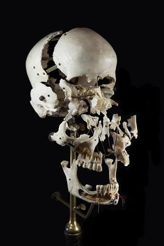 """Edmé François Chauvot de Beauchêne (ca. a French anatomist and surgeon, developed the """"exploded skulls"""" for anatomical studies. Beauchêne would meticulously clean a skull, separate its bones, and mount them on a stand. Skull Reference, Anatomy Reference, Crane, Human Skull, Skull And Bones, Memento Mori, Macabre, Dark Art, Illustration"""