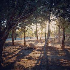 Sunset - Parque Norte