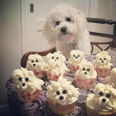 Poodle cupcakes!!! hahaha :)