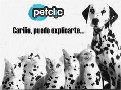 Fotos divertidas de animales #perros