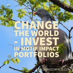 Motif Impact Investing Review - Robo Investing With Your Heart