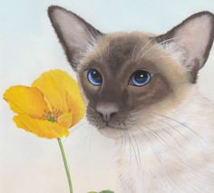 "Siamese Cat ""Flower for you"" Limited Edition Fine Art Canvas Print - Sue Barratt"