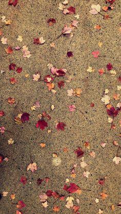 autumn kindly decorates the sidewalks autumn kindly decorates the sidewalks. Fall Wallpaper Tumblr, Iphone Wallpaper Fall, Cellphone Wallpaper, I Wallpaper, Flower Wallpaper, Lock Screen Wallpaper, Mobile Wallpaper, Wallpaper Backgrounds, Cute Fall Wallpaper
