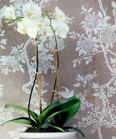 Designers Guild - Fabrics & Wallpaper Collections, Furniture, Bed and Bath, Paint, and Luxury Home Accessories.  Make using wrinkled Kraft paper and white stamp pad.    Make a tablecloth out of it.  @@@@