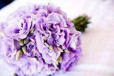 Lavender lisianthus