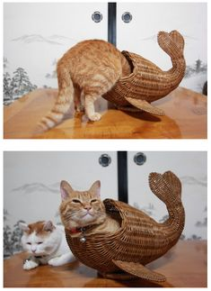Fish kitty http://ift.tt/2kEqAle