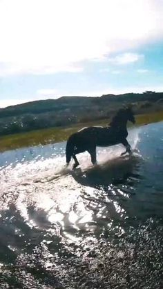 Horse Story, Thunder And Lightning, Pretty Horses, Wild Horses, Equestrian, Cute Animals, Friends, Horse Videos, Moving Wallpapers