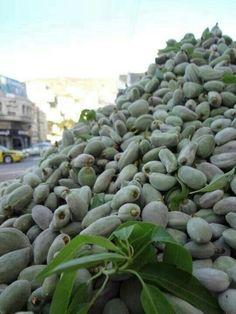 Almonds of Palestine