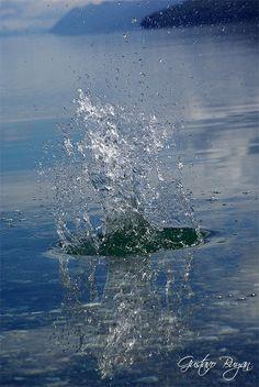 Splash in the lake - Lake Fagnano