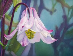Columbine/Aquilegia flower watercolor by Shirley Greenville
