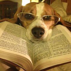 Why do they always put glasses on dogs to take a photo of them with books! I take pictures of my dog with books and she doesn't wear glasses!