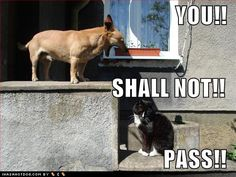 funny pet pictures with quotes - Google Search