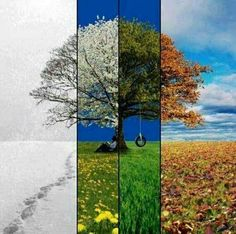 Four Seasons: I have a vague idea of doing something like this in my living room with a series of photos. Seasons Of The Year, Four Seasons, Change Of Seasons, Season Change, Time Photography, Landscape Photography, Different Seasons, Wow Art, Art Plastique