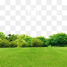 잔디,숲,봄철 소재,요소,포인트 Banner Background Images, Studio Background Images, Background Images Wallpapers, Tree Photoshop, Photoshop Overlays, Photoshop Elementos, Overlays Picsart, Episode Backgrounds, Cute Profile Pictures