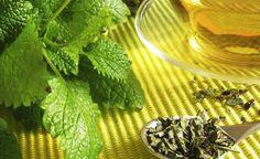 Os benefícios do chá de melissa para sua saúde Influenza, Green Beans, Herbs, Meat, Fruit, Vegetables, Minden, Food, Tea Types