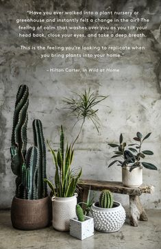 "We asked ""plantfluencer"" Hilton Carter to share some of his favorite modern planter ideas to cultivate your indoor jungle, and his picks did not disappoint. Modern Planters, Large Planters, House Plants Decor, Plant Decor, Plantas Indoor, Cactus Y Suculentas, Plant Nursery, Outdoor Plants, Container Plants"
