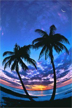 Gulfshore Life - Southwest Florida's Luxury Lifestyle Magazine Life Cover, Nature View, Life Magazine, Naples, Life Is Good, Beautiful Places, Tropical, Florida, Tumblr