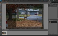 Photoshop Elements- Cropping vs. Resizing.