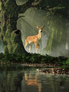 Fawn in the Forest by deskridge on DeviantArt Animal Photography, Nature Photography, Woodland Forest, Tier Fotos, Chiaroscuro, Wild Nature, Fantasy Landscape, Texture Painting On Canvas, Deer Photos