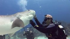 Shark Diver - Eli MartinezVideo by Armando GasseFilmed in the Bahamas, February 2011I made this video to showcase my work with tiger sharks and lemon sharks. Two species that I have spent countless hours diving with and interacting with. These sharks are amazing animals, and I love and respect them. This video contains footage that shows me interacting with these sharks in one on one moments.  Despite this looking easy and relaxed, it is only because I have been  working with these same…