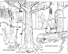 printable decidUOUS FOREST PICTURES | ... second Ponderosa Pine Forest Master Sheet (B). Tell them they are to