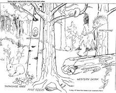 ausmalbilder, malvorlagen - wald kostenlos zum ausdrucken - malvorlagen wald…   deer