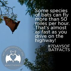 Conserving the world's bats and their ecosystems to ensure a healthy planet Bat Conservation International, Bat Facts, Bat Flying, Cute Bat, Creatures Of The Night, Why Do People, Animal Care, Weird World, Spirit Guides