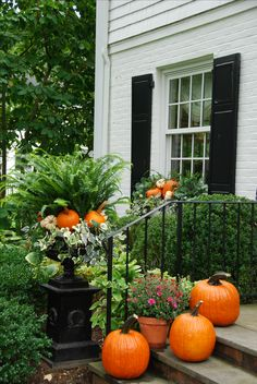 Summer ferns and blooms still lingering with the arrival of pumpkins!