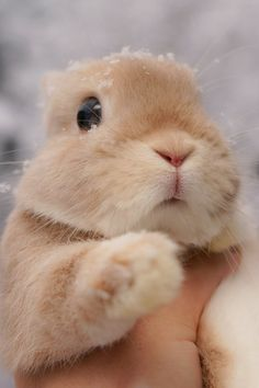 30 cute bunny pictures you have to see today Cute Baby Bunnies, Funny Bunnies, Cute Little Animals, Cute Funny Animals, Fluffy Animals, Animals And Pets, Cute Bunny Pictures, Bunny Pics, Bunny Images